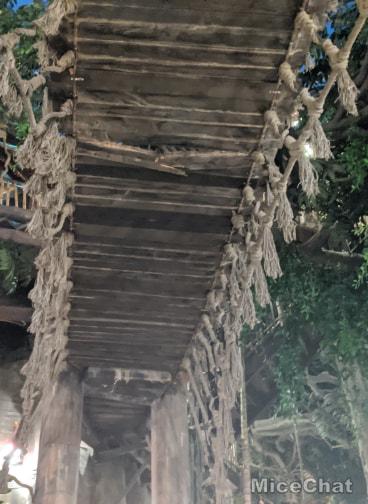 , Breaking News – Tarzan's Treehouse Emergency Closes at Disneyland